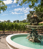 Clos Pegase Fountain and Vineyard