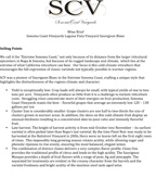 SCV Sauvignon Blanc Wine Brief